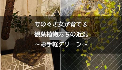 ズボラ女が育てる観葉植物の近況