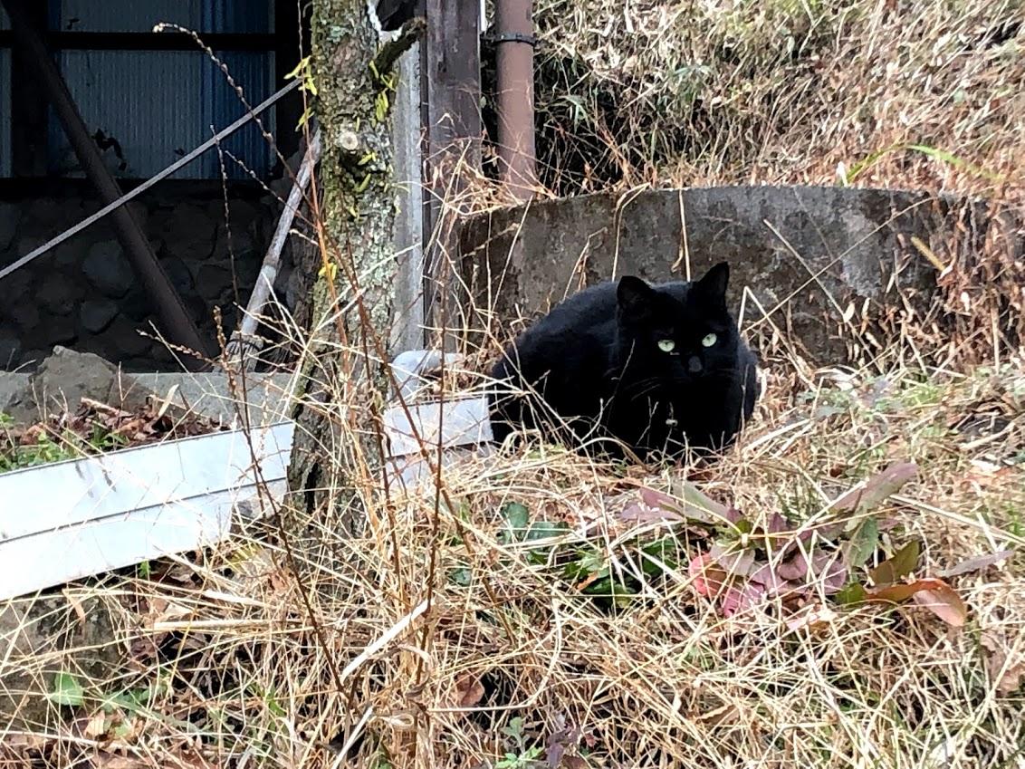黒くて丸い猫