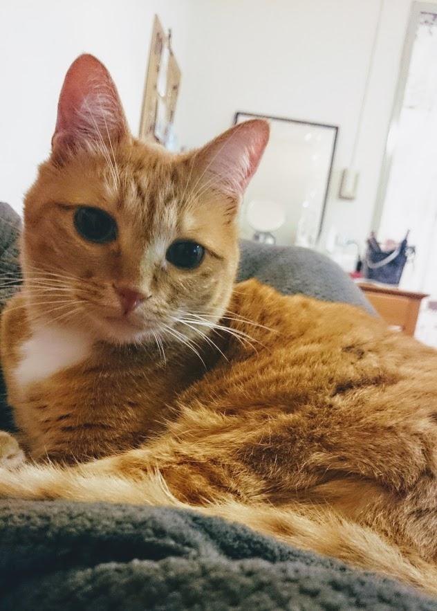 ウナチカの飼い猫