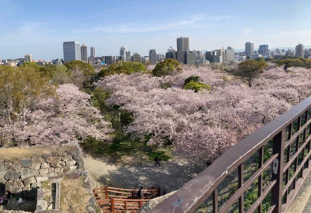 福岡城花見